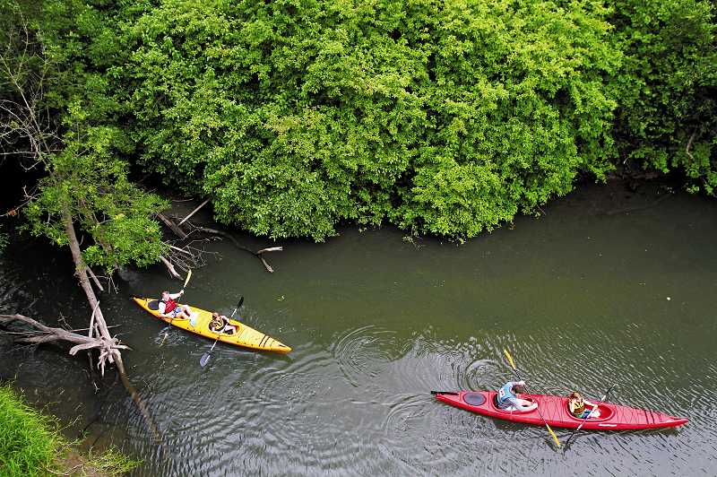 by: JONATHAN HOUSE - Kayakers emerge from the a cove on the Tualatin River, where hundreds took to the water to explore the river.