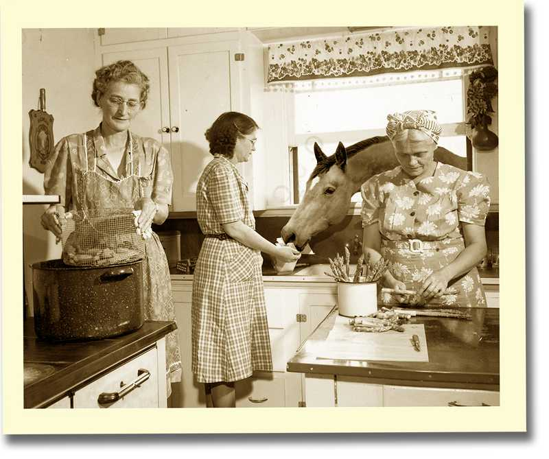 by: SUBMITTED PHOTO - The cover for 'Get That Horse Out of the Kitchen!' was modified from a picture found at the University of Oregon. The horse was added.