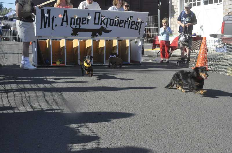 by: LORI HALL - Dogs left the gates at the start of the wiener dog races Aug. 1 with varying results ¬ some dashed to their owners while others preferred to socialize and explore.