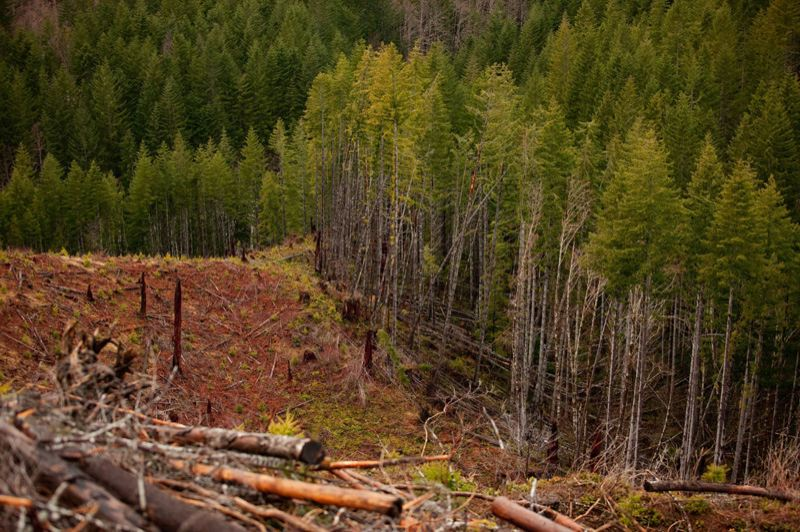 by: PAMPLIN MEDIA GROUP: CHRISTOPHER ONSTOTT - Conservationists such as Andy Kerr envision an Oregon future without clear-cutting (in the Tillamook Forest) and more thinning of plantations and old-growth forests.