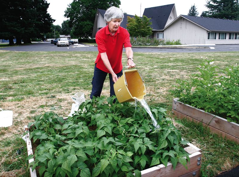 In a one-woman gardening project, Barbara Brooks of Gresham grows beans and potatoes in raised planter boxes at her church, Covenant Presbyterian, and donates the produce to SnowCap Community Charities.