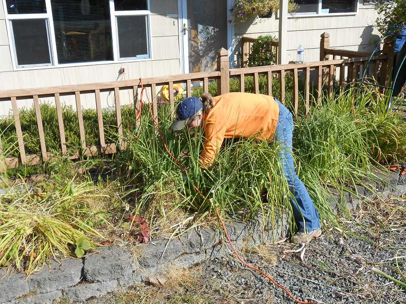 by: JORDY BYRD  - Brenda Werrett of West Linn pulls weeds out of a flowerbed. This was her third year volunteering with Neighbors Helping Neighbors.