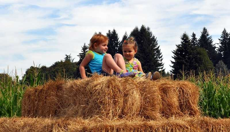by: SUBMITTED PHOTOS: ROBERTA SCHWARZ - Children enjoy a hay maze during the Festival at the Farm on Sept. 15 at Fiala Farm in West Linn.