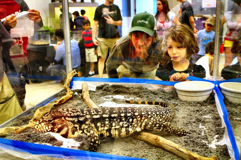 by: DAVID F. ASHTON - Jason Letarte and Celina Letarte look like they're glad this big lizard is tucked safely behind glass in this display at the OMSI Reptile and Amphibian Show.