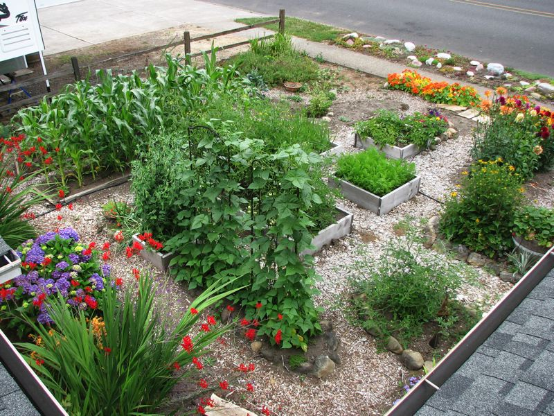 by: CONTRIBUTED PHOTO - After moving to Sandy, Tracy Trandum and Adam Triplet built their dream produce garden.