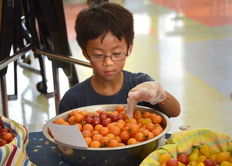 by: TIDINGS PHOTO: VERN UYETAKE - Jacob Khamphilauong, fourth grade, picks out a cherry tomatoes to try.
