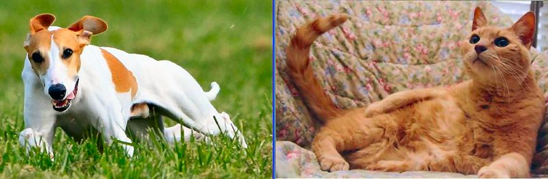 by: PHOTOS COURTESY OF THE OWNERS OF EACH PET - Icarus, left, and Duma were the two top vote-getters in the local pet photo contest.