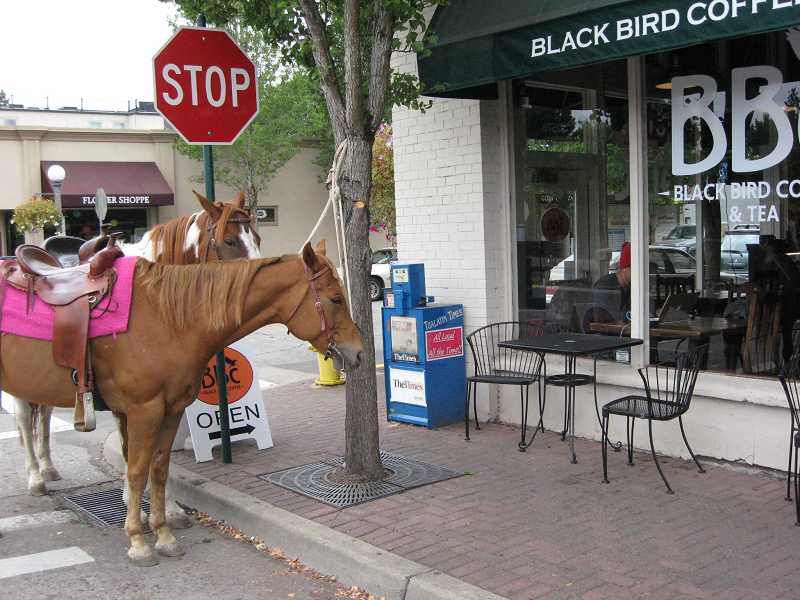 by: 2011 FILE PHOTO BY RAY PITZ  - This is how the former Blackbird Coffee Company looked last fall when two horses paid a visit to the popular Old Town location. In January, the Bank of Oswego's Sherwood Business Banking Center plans to open at the site.
