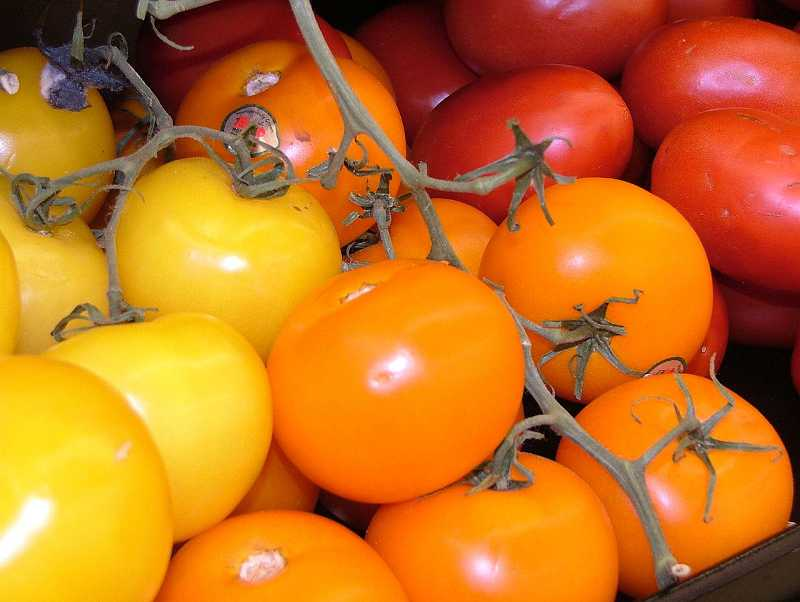 by: SUBMITTED PHOTO - Tomatoes come in a variety of colors, including green, yellow, orange, red and deep purple.