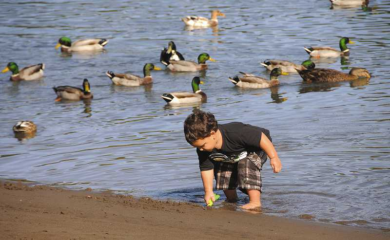 by: REVIEW PHOTO, VERN UYETAKE - Riley Shaw-Huelsman, 2 1/2, of West Linn digs in the sand at George Rogers Park.