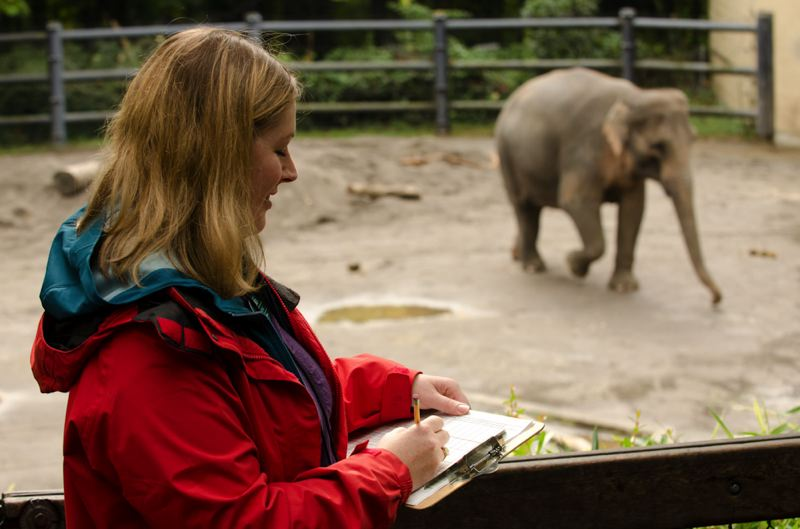 by: COURTESY OF MICHAEL DURHAM: THE OREGON ZOO - Oregon Zoo research associate Heather Velonis collects behavioral data on Asian elephant Rose-Tu, who is entering her 21st month of pregnancy. Rose-Tu is expected to give birth to her second baby this fall, and biologists are watching her closely for clues that might help predict elephant due dates.