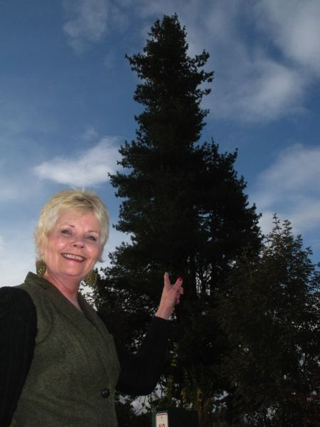 by: POST PHOTO: JIM HART - POST PHOTO: JIM HART Sandy Jordan gestures toward the tall tree she hopes to light for the 2013 holiday season.
