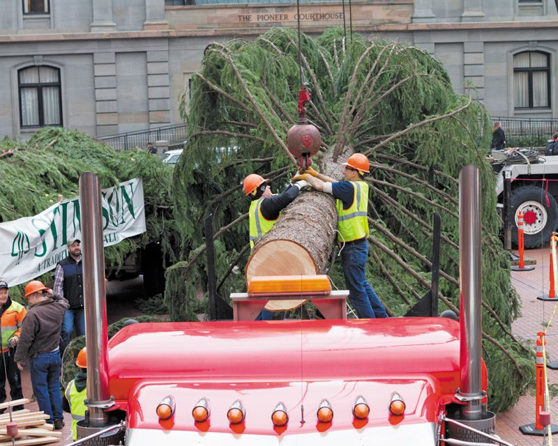 by: NEWS-TIMES PHOTO: CHASE ALLGOOD - Workers from Stimson Lumber attach a crane to the 75-foot douglas fir that will dress up Pioneer Courthouse Square through the holiday season.