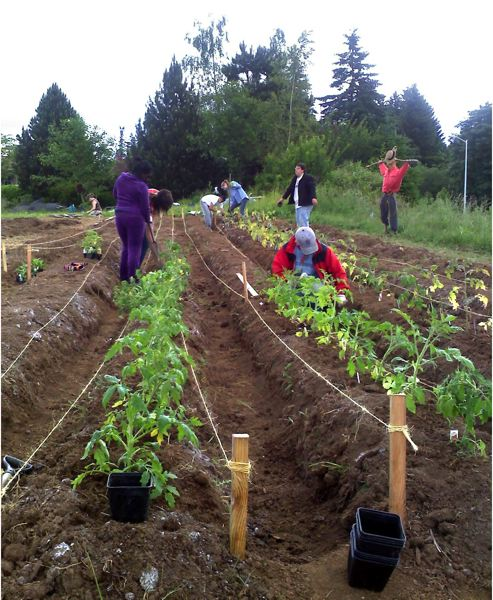 by: CONTRIBUTED PHOTO: - AntFarm students plant tomatoes last spring in the 1.5-acre garden in west Sandy. The crops are harvested for the benefit of clients of the Sandy Community Action Centers food pantry.