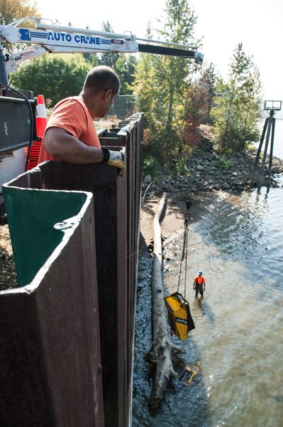 by: CITY OF MILWAUKIE - Milwaukie's Public Works crews pull a handful of metal newspaper vending boxes from the Willamette River.