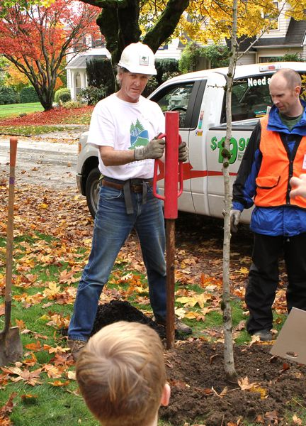 by: DAVID F. ASHTON - Neighbor and returning volunteer Karl Lee drives a stake, to help steady his new ginkgo tree.