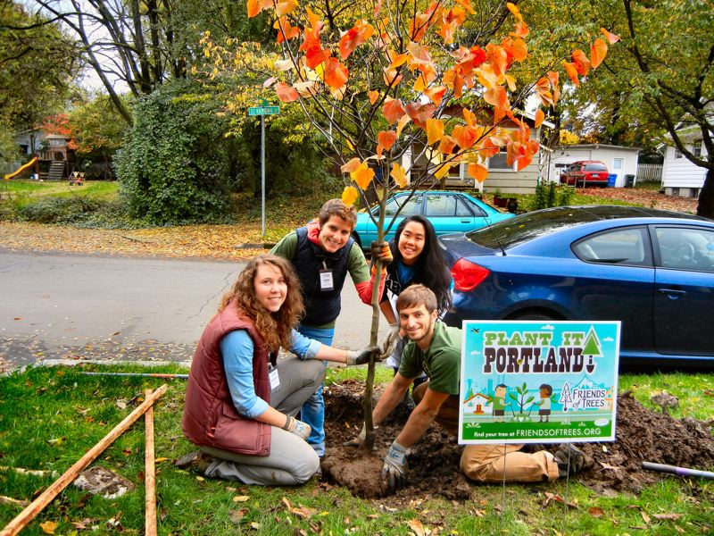 by: ELIZABETH USSHER GROFF - A Forest Pansy Redbud - a tree that will have fragrant red-purple blooms in early spring and a profusion of red, purple, and yellow leaves in the fall - is planted in the Woodstock Neighborhood by Friends of Trees Crew Leaders Amanda Riesenberg, Amy Michet, Krystal Lum, and Joe Hand.