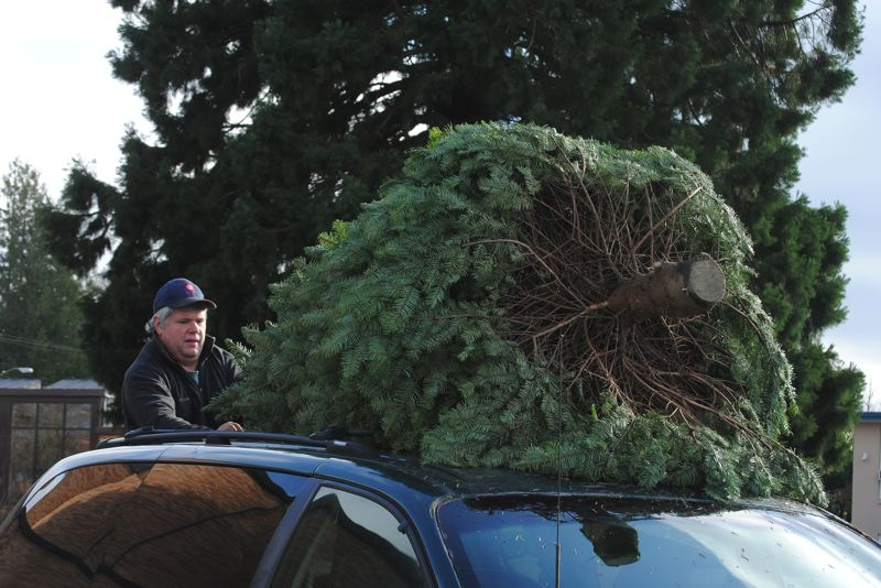 by: HILLSBORO TRIBUNE PHOTO: STEPHANIE HAUGEN - Frank Lux wrestles a tree to the top of a car during St. Matthews tree sale, which raises money for several programs to help local residents in need.