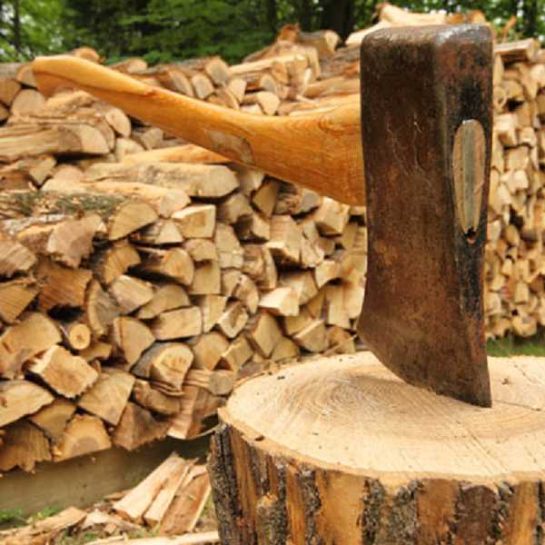 by: SUBMITTED PHOTO  - Out of state firewood may harbor invasive pests.