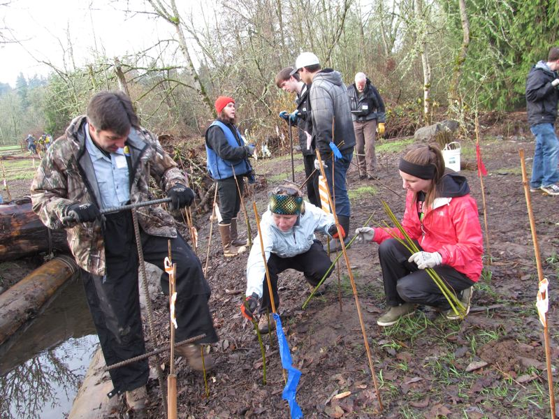 by: PHOTO BY ELLEN SPITALERI - Rob Waibel, Shannon McBride and Emma Waibel worked together to plant willow stakes at North Clackamas Park on Dec. 8, as part of a Friends of Trees event.