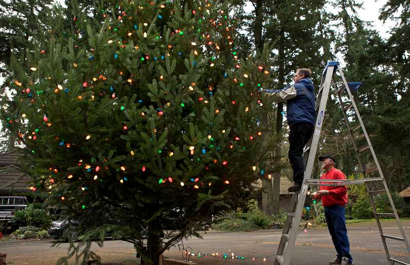 by: JAIME VALDEZ - Neighbors Steve Balsiger and John Durst place Christmas lights on a Christmas tree in the cul-de-sac on Southwest Thistlebrook Court in Durham. On Sunday, December 9, the neighbors gathered around for the annual tree lighting.