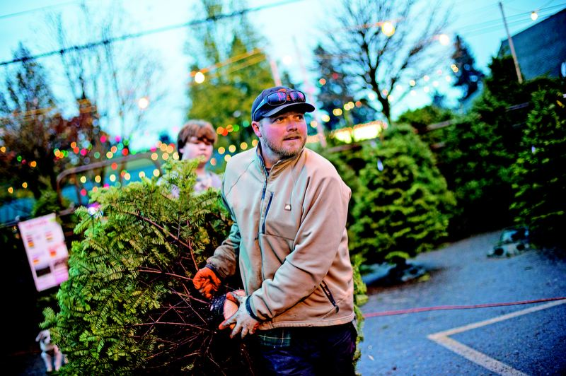 by: TRIBUNE PHOTO: CHRISTOPHER ONSTOTT - Those aren't horses in Kiley Cronen's Sellwood corral. Cronen sells Christmas trees every year to a flock of regulars.