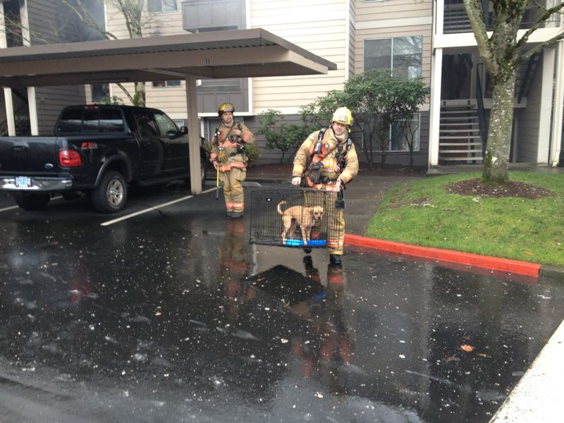 by: CLACKAMAS FIRE DISTRICT NO. 1 - Crews from Clackamas Fire District No. 1 rescue pets from a Saturday fire at 13608 S.E. 97th in Clackamas.