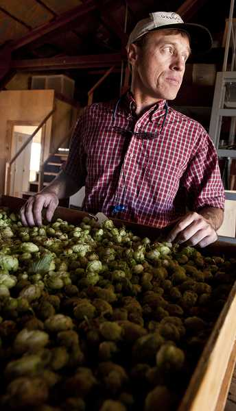 by: SUBMITTED PHOTO: LYNN KETCHUM - Oregon State University's hops breeder, Shaun Townsend, prepares hops for drying at OSU's hop yard in Corvallis