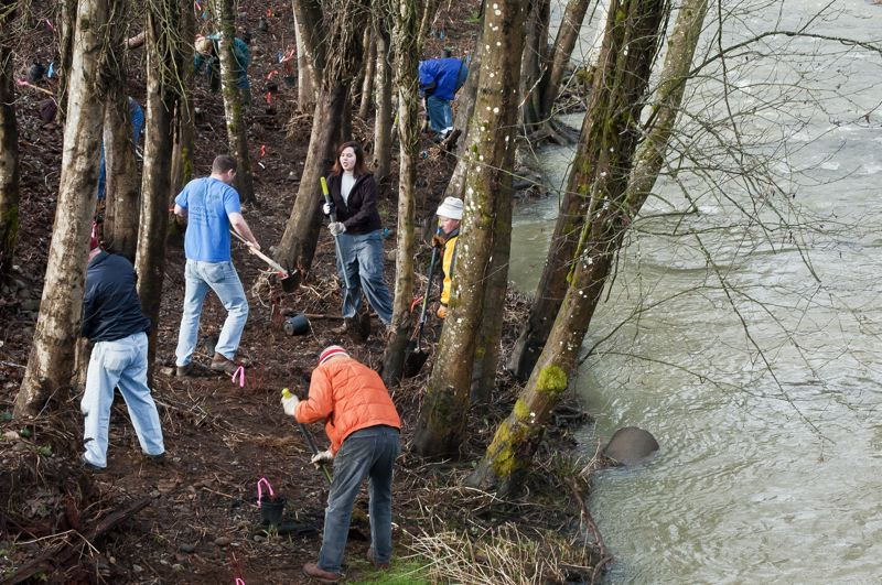 by: CONTRIBUTED PHOTO: - CONTRIBUTED PHOTO Volunteers planted trees and shrubs near the banks of the North Fork of Deep Creek near downtown Boring last year at this time. The Clackamas River Basin Council and the Boring-Damascus Grange organize the event. The CRBC is now asking for volunteers for the Feb. 9 event.