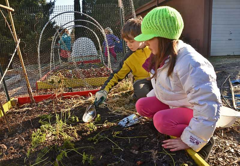 by: VERN UYETAKE - Liam Schauer, 9, left, and Kiley Baker, 9, dig up carrots from a plant bed.