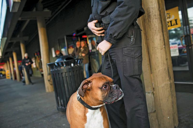 by: TRIBUNE PHOTO: CHRISTOPHER ONSTOTT - Reiley, a drug-sniffing German boxer, has been deployed along with several new security guards to deter crime at the 'Lottery Row' strip mall on Hayden Island.