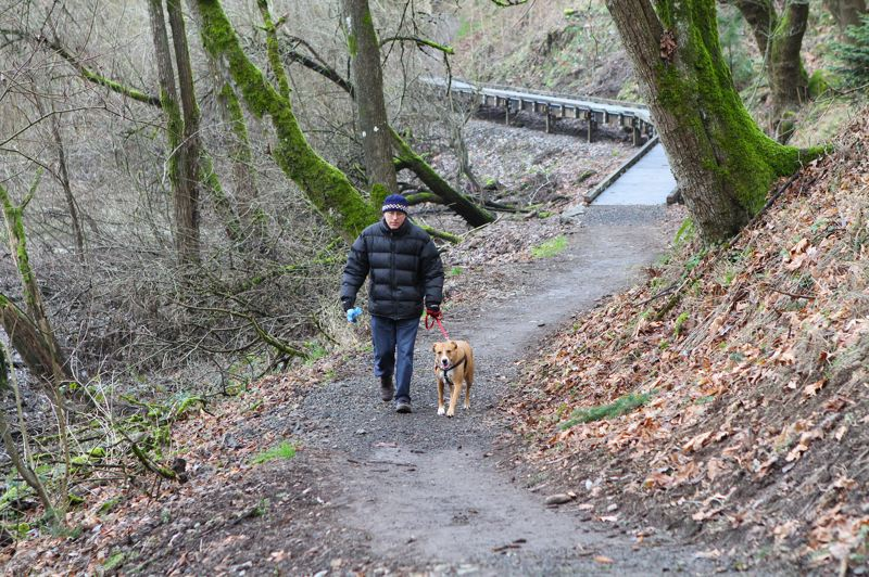 Sellwood resident Robert Cavender and Maggie (his pooch) take a stroll along the newly-reopened Oaks Bottom Bluff Trail after crossing one of the new boardwalks.