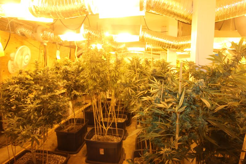 by: CONTRIBUTED PHOTO - Kevin Davis, a Kansas fugitive, allegedly possessed 84 marijuana plants in a home near Boring.