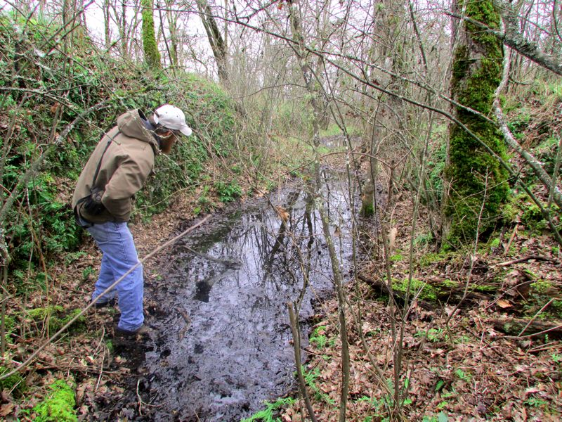by: SPOTLIGHT PHOTO: DARRYL SWAN - Charles McCoy, coordinator of the Scappoose Bay Watershed Council, explores a pool of black standing water caught in a ravine at Nob Hill Nature Park. The council had provided grant funding for restoration work in the park, including eradication of English ivy and Himalayan blackberries. SPOTLIGHT PHOTO: DARRYL SWAN