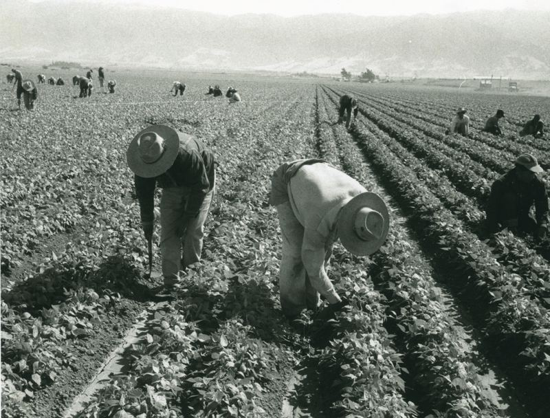 by: COURTESY PHOTO: THE SMITHSONIAN -  Mexican braceros came to Oregon to fill a shortage in agricultural workers during World War II.