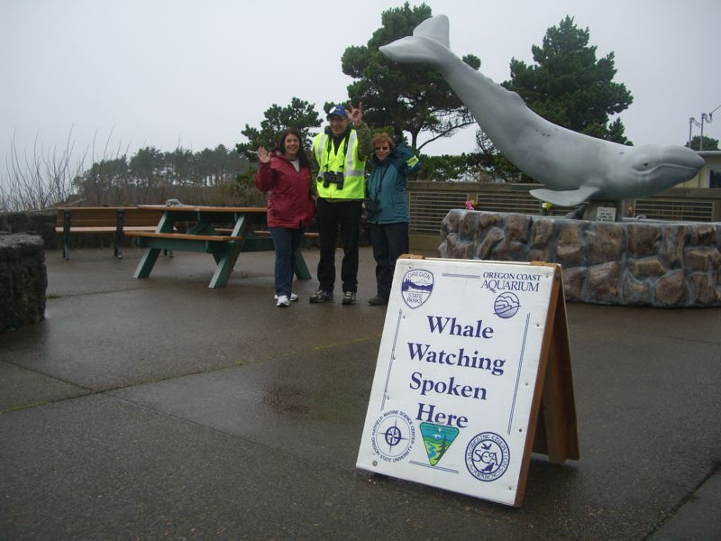 by: COURTESY OF THE OREGON PARKS AND RECREATION DEPARTMENT - Voluntteers will help visitors spot migrating gray whales during the last week of the month from 24 whale-watching locations along the Oregon Coast.