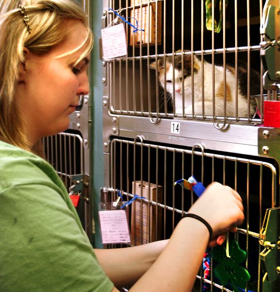 by: OUTLOOK PHOTO: JIM CLARK - Harmony the cat watches as Kelsey Orchard of Reynolds High School attaches one of the metal shamrocks on a cage.