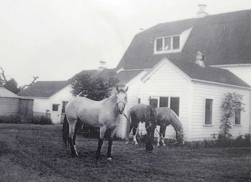 Trigger, next to the barn, is shown during one of his vacations at Spring Meadows Farm, where Roy Rogers used to board him on visits to the Northwest.