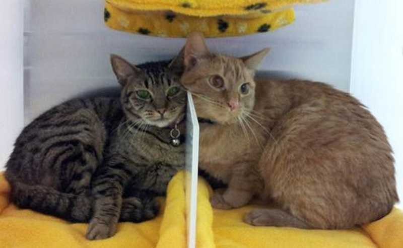 by: COURTESY OF CAT ADOPTION TEAM - Hazel and Grace are looking for a home, hopefully together, after being discovered in a trash container last weekend.