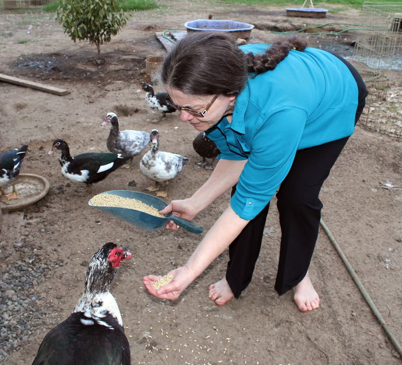 by: OUTLOOK PHOTO: ANNE ENDICOTT - McClain keeps nearly two dozen ducks on her property, which also features a waterfall and small garden. She frequently offers duck eggs as part of her breakfast menu.
