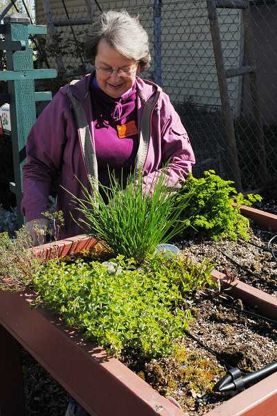 by: NEWS-TIMES PHOTO: STEPHANIE HAUGEN - Anna Stubbs tends this table top garden, which is ideal for those who have difficulty bending or need support.