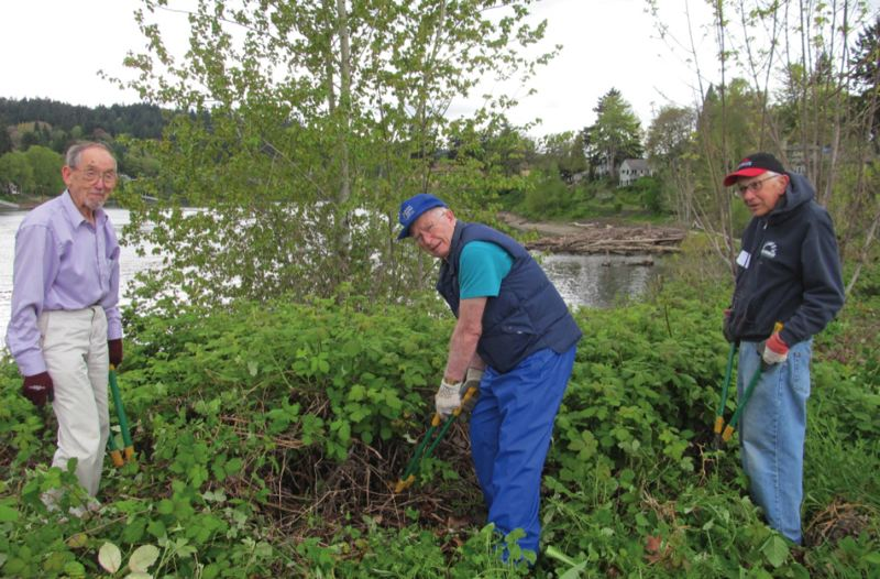 "by: PHOTO BY ELLEN SPITALERI -  Martin Small, left, Lloyd Peterson and Tom Hill, members of Willamette View€sˇÃ""ôs Green Team, attacked a stand of blackberries at Milwaukie's Riverfront Park."