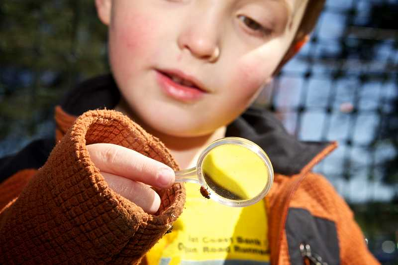 by: JAIME VALDEZ - Ethan Ruby, 4, watches a ladybug crawl on a magnifying glass he holds before releasing it in a garden at Touchstone School in Tigard. Students learn about the life cycle insects in class and release thousands of ladybugs each spring in celebration of Earth Day.