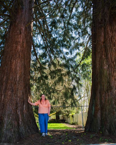by: NEWS-TIMES PHOTO: CHASE ALLGOOD - Forest Grove City Councilor Victoria Lowe has a pair of Giant Sequoias in her Forest Grove yard that are listed in the citys Register of Significant Trees.