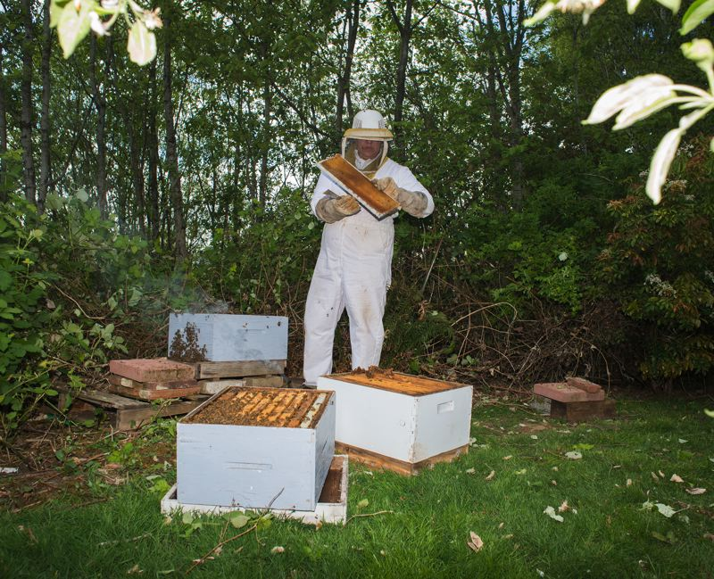 by: NEWS-TIMES PHOTO: CHASE ALLGOOD - Elizabeth Mathiesen of Forest Grove has been beekeeping since 2005. She expanded the bees hive after her first inspection this spring.