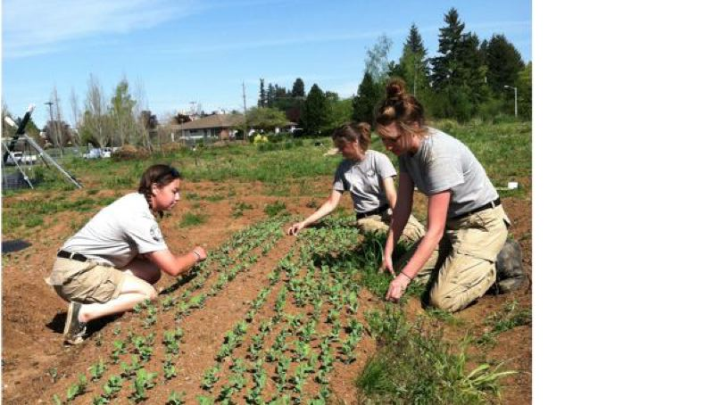 by: CONTRIBUTED PHOTO - Recently, when students were still in school, AmeriCorps volunteers worked in one of AntFarms outdoor programs, a community garden. Pictured, from left, are Katy Cummings, Camille McMillan and Rachel Hanson.  Suburban Auto Group donates the use of this land for the garden.