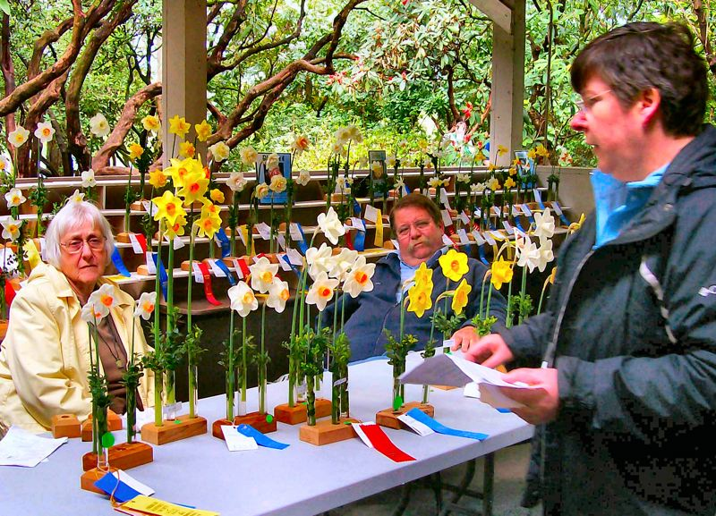 by: RITA A. LEONARD - Theresa Fritchle (right) organized the judges at the April Daffodil Show at the Rhododendron Garden on S.E. 28th just west of Reed College. At left is judge Elise Havens from Mitsch Daffodils.