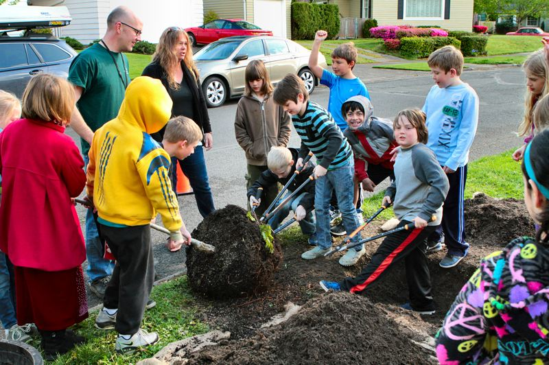 by: DAVID F. ASHTON - Duniway students take turns preparing the root ball of this Accolade elm tree before planting.