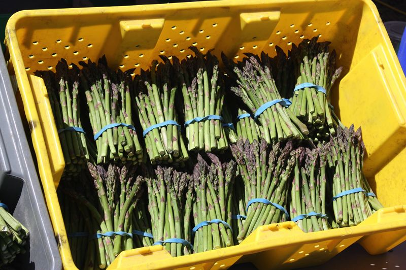 by: HILLSBORO TRIBUNE PHOTO: DOUG BURKHARDT - Fresh asparagus from Washingtons Yakima Valley proved to be a very popular item on opening day of the 2013 Farmers Market.
