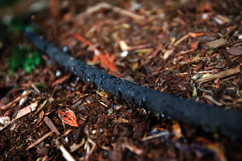 by: PAMPLIN MEDIA GROUP: JONATHAN HOUSE - A soaker hose has been described as a poor mans drip-irrigation system. Its a cheap and easy way to water shrubs and gardens, and is easily moved around as needed.